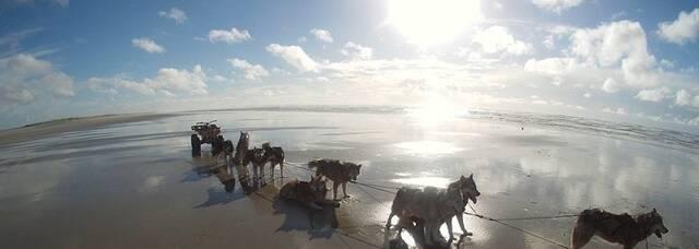 Cani randonnée © Lounocks