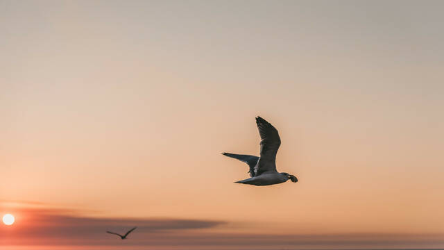 Bird © Rui Marinho- unsplash